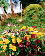 Flowers67 (Nifty Fifty) Tags: mamiya rz67 ektar100 120 mediumformat kodak silverpan imacon hasselbladx5 captureone
