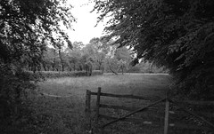 Old gate (Rosenthal Photography) Tags: asa400 kleinbildformat ilfordlc2912920°c9min ff135 analog ilfordhp5 epsonv800 olympustrip35 schwarzweiss frühling ilfordrapidfixer 35mm sommer 20190601 oldgate gate spring may landscape meadow field trees mood backandwhite olympus olympus35 trip trip35 dzuiko zuiko 40mm f28 ilford hp5plus hp5 lc29 129 rapid fixer rapidfixer epson v800