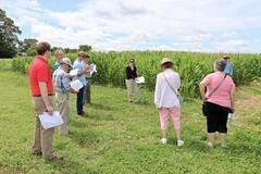 IMG_7616 (UGA CAES/Extension) Tags: cornboil jphilcampbellsrresearchandeducationcenter cropandsoilsciences oconeecounty researchers cropandsoil livingmulch