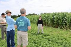 IMG_7603 (UGA CAES/Extension) Tags: cornboil jphilcampbellsrresearchandeducationcenter cropandsoilsciences oconeecounty researchers cropandsoil livingmulch