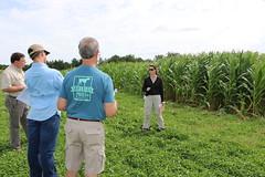 IMG_7604 (UGA CAES/Extension) Tags: cornboil jphilcampbellsrresearchandeducationcenter cropandsoilsciences oconeecounty researchers cropandsoil livingmulch