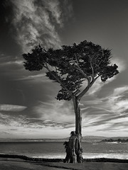 Cypress at Lovers Point (StefanB) Tags: ocean california sea tree clouds coast treescape 2018 pacifc em5 1235mm cypress pacificgrove