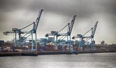 The Cranes of Dublin Docks (Gill Stafford) Tags: gillstafford gillys image photograph ireland north docks port cranes dublin machinary shipping industrial landscape