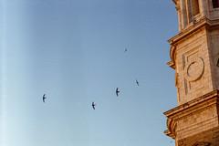 (Tamar Burduli) Tags: tamarburduli 35mm analog film birds sky skyscape architecture travel cadiz cádiz spain swallow swallows cathedral cádizcathedral zenit