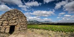 Guardaviñas (Fede A. Ruiz) Tags: guardaviás viña haro rioja españa spain vineyard vino nikon sigma