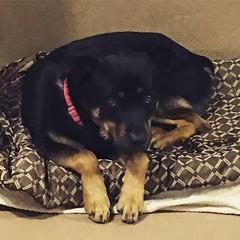 San Diego Humane Society (Sunny Day Photography) Tags: sandiegohumanesociety animalshelter sandiego pets adopt