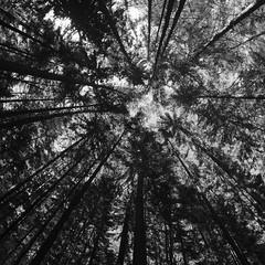 Up / Вверх (Boris Kukushkin) Tags: forest trees sky bw square fisheye abstraction abstract perspective лес деревья дерево небо чб квадрат абстракция абстрактный фишай перспектива