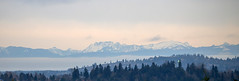 View to the mountans from Seattle, USA (thorrisig) Tags: 20012019 seattle usa landslag sigurgeirsson sigurgeirssonþorfinnur dorres thorrisig thorfinnursigurgeirsson thorri þorrisig thorfinnur þorfinnur þorri þorfinnursigurgeirsson landscape mountains trees sky