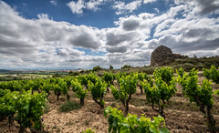 Viña (Fede A. Ruiz) Tags: haro rioja españa spain vineyard