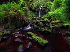 In Amongst The Undergrowth (ttarpd) Tags: hindhope linn waterfall river stream blakehope burn magical enchanting dell blakehopeburnhaugh kielder forest drive northumberland north east england uk landscape gb britain greatbritain tree trees green moss mossy fuji fujifilm fujinon gfx50r gf23mmf4 fujinongf23mmf4rlmwr