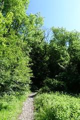 Hike to Le Môle (*_*) Tags: 2019 spring printemps june morning matin europe france hautesavoie 74 bonneville hiking mountain montagne nature randonnee trail sentier walk marche chablais lemole forest sunny
