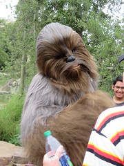IMG_0278 (CAHairyBear) Tags: disneyland starwars galaxysedge chewbacca chewie