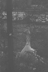 000033740016 (old_dancer) Tags: blackandwhite 35mmfilm zenit