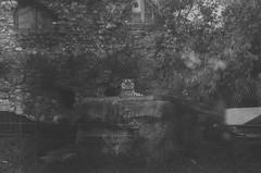 000033740026 (old_dancer) Tags: blackandwhite 35mmfilm zenit