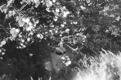 000033740029 (old_dancer) Tags: blackandwhite 35mmfilm zenit
