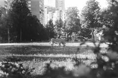 000033740025 (old_dancer) Tags: blackandwhite 35mmfilm zenit