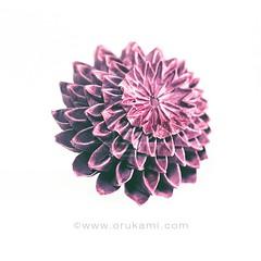 Ishii Seiichi Origami Dahlia (Himanshu (Mumbai, India)) Tags: ishii seiichi origami dahlia flower himanshu mumbai india paper art craft orukami origamihim himanshuorigami