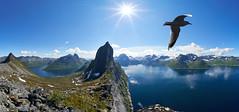 2019-06-20 11.52.18 (freundderberge) Tags: norway senja segla seagull panorama fjordmountain sea bird