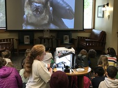 NorCal Bats (Santa Cruz Public Libraries) Tags: scpl santacruzpubliclibraries santacruz santacruzpubliclibrary liv liveoaklibrary liveoakbranchlibrary liveoakbranch liveoak liveoakpubliclibrary norcalbats kids kidsprograms srp srp2019 2019 summerreading summerreadingprogram summer libraryprogram library