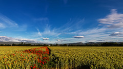 4 al rojo - Red four (Tate Kieto) Tags: field countryside landscape spring flower color nature