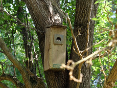 I Don't Think That is a Bird! (picturetakingone) Tags: strange creature looking out bird box back yard virginia beach