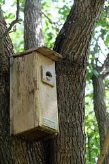 What Kind of Bird is That in the Bird Box? (picturetakingone) Tags: bird box virginia beach reptile back yard strange odd peeking out