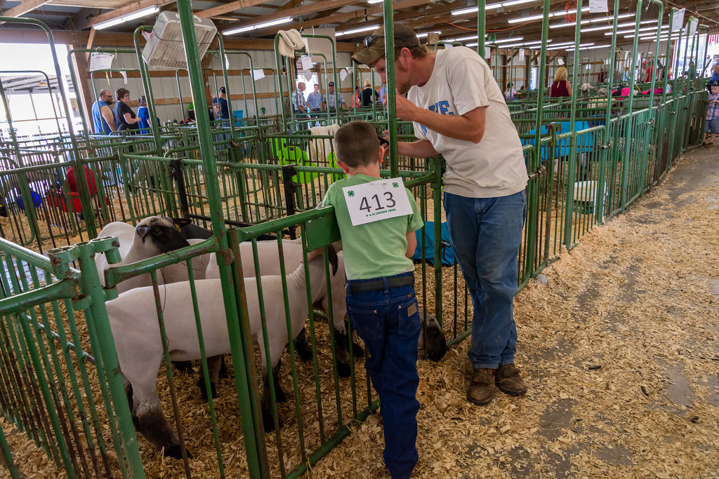 The World's Best Photos of 4h and indiana - Flickr Hive Mind