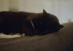 Sleepy Cat (itskaty) Tags: zenit zenitet slr kodakgold kodakgold200 cat