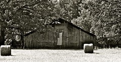 Americana (Dee Gee fifteen) Tags: barn flag rural country trees monochrome haybales bw