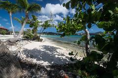 A little slice of Sapphire Beach (tquist24) Tags: nikon nikond5300 outdoor sapphirebeach stthomas usvirginislands virginislands beach clouds geotagged island ocean palmtree sand sea seascape shore sky tree trees tropical water mangrovetree