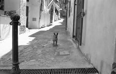 E' la mia terra (michele.palombi) Tags: south fomapan dog calabria film35mm analogicshot oldtown crotone