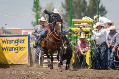 Strathmore Stampede 2018 (tallhuskymike) Tags: strathmorestampede event rodeo cowboy cowgirl horse horses action western 2018 prorodeo outdoors alberta strathmore