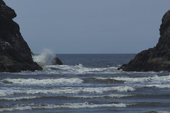 IMG_5034 (thetempleofsteve) Tags: oregon coast florence beach lighthouse heceta ocean dog dogs puppy puppers