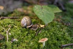Hungry Snail (Bobson Dugnutt) Tags: snail gunks
