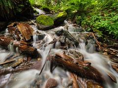 EXPLORED: Bridal Veil Falls Cascade I (SGarriott) Tags: sgarriott scottgarriott olympus omd em5ii 714mmf28 nature bc canada stream creek water flow cascade log green forest moss longexposure hdri bridalveilfalls