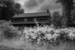 Closed Cabin (David Guidas) Tags: buildings houses cabins flowers white roads rural leica m9 monochrome black abandoned elmarit 28mm