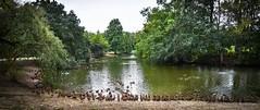 Duck Haven at Audubon Park (Marcie Braden) Tags: nola neworleans louisiana audubonpark ducks lake lakeview