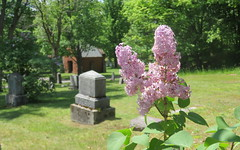 Cemetery lilacs (yooperann) Tags: cemetery graveyard flowers light purple lilacs marquette upper peninsula michigan historic