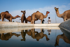 Water point (SaumalyaGhosh.com) Tags: water camel street travel india pushkar color reflection streetphotography fuji fujifilm xt2