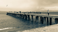 Photos & Fishing (mpalmer934) Tags: san francisco bay california fishing pier birds water waves alcatraz wide angle