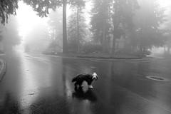 (sparth) Tags: jasper bearded collie beardedcollie dog chien blackwhite blackandwhite bw brouillard noirblanc noiretblanc fog foggy seattle washington washingtonstate wa sparth littledoglaughednoiret