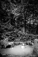 Onsen (patoche21) Tags: asie asiedelest japon monochrome nature naturel paysage photographie shinano ambiance atmosphère automne baignade baigneur bain eau forêt gens homme noiretblanc onsen roche scènedevie sociétale spa patrickbouchenard bw blackandwhite japan asia eastasia atmosphere bath people tradition life forest