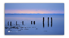 Its Dem Posts Again... (RonnieLMills 7 Million Views. Thank You All :)) Tags: rotten wooden posts jetty diving platform reflections water strangford lough early morning colours ripples high tide rough island islandhill comber newtownards county down northern ireland ronnielmills landscape photography