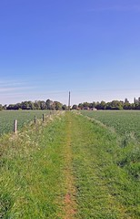 35804 (benbobjr) Tags: lincolnshire lincoln uk greatbritain england english unitedkingdom britain path meg gb british footpath fens pathway fenland bridleway midlands publicfootpath thefens eastmidlands blankney scopwick metheringham kirkbygreen northkesteven metheringhamfen rural