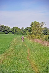 35803 (benbobjr) Tags: lincoln lincolnshire midlands eastmidlands england english uk unitedkingdom gb greatbritain britain british metheringham northkesteven fens fenland thefens meg metheringhamfen scopwick kirkbygreen blankney path footpath pathway publicfootpath bridleway rural