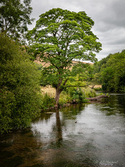 Drink! (Through_Urizen) Tags: category derbyshire england landscape places upperdale canon canon1585mm tree river canon70d water hills dale trees countryside rural nature natural landscapephotography uk unitedkingdom greatbritain