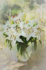 Bowl of Lilies (judy dean) Tags: judydean 2019 lilies vase white scent stamens garden texture ps flowers gorgeousbuttheystink 365the2019edition 3652019 day178365 27jun19