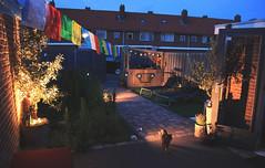 Cordesstraat Tuin Juni2019-11 (gabrielgs) Tags: cordesstraat hoekvanholland home tuin thuis garden buitenkeuken zomer 2019 gabrielschoutendejel esther