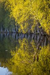 Heijastuksia Isolammilla (Markus Heinonen Photography) Tags: isolammi isolampi kaukajärvi järvi lake tampere suomi finland puu tree heijastus reflection luonto nature maisema landscape waterscape water vesi europe