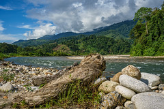 Views near Ketambe, Banda Aceh (feisas) Tags: indonesia rainforest jungle forest mountains bukit nature alam bagus hiking camping colorful landscape bandaaceh ketambe river water tree outdoor outside clouds sky travel natural sonya7 fullframe clear